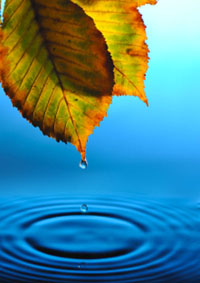 falling drops