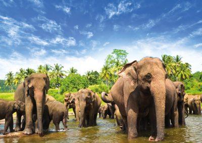 sri-lanka-elephants-1600x900